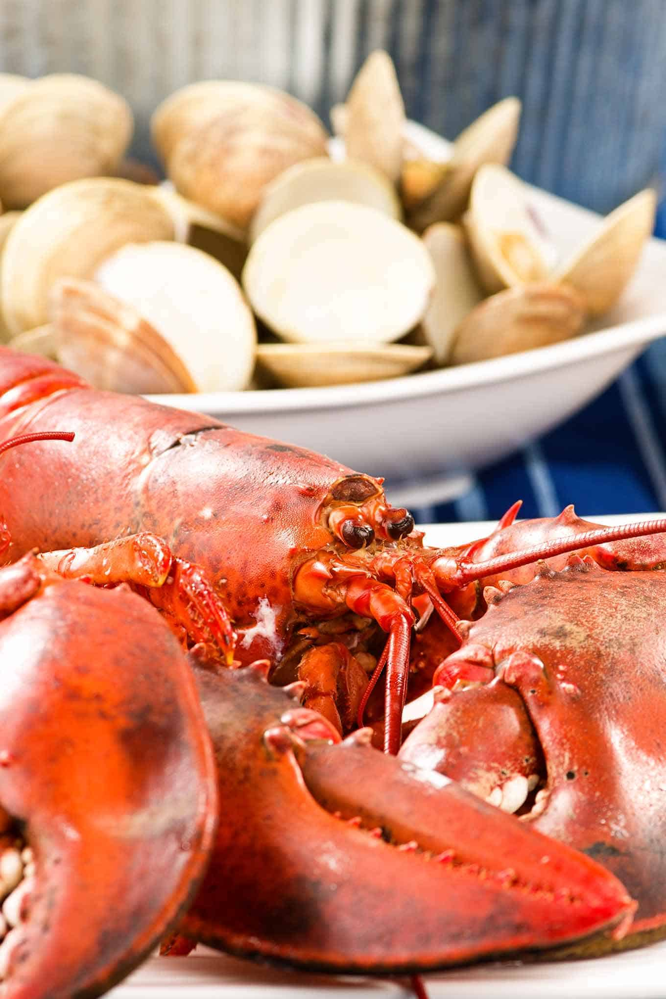 Whole cooked lobster on a plate with a bowl of steamed littleneck clams in the background.