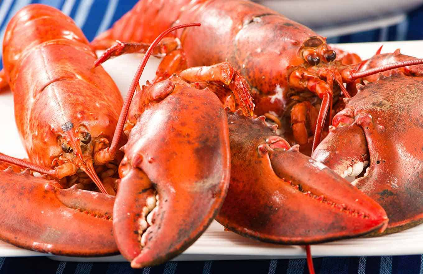 Two fully-cooked, whole lobsters on a plate.